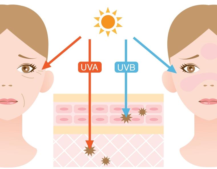 UVA UVB infographic